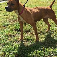 Adopt A Pet :: Becca - Boca Raton, FL