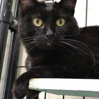Adopt A Pet :: Trouble 3 - Maryville, MO