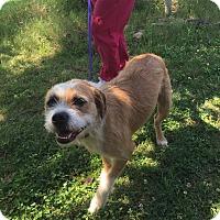 Adopt A Pet :: Oscar - Windham, NH