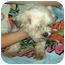 Photo 2 - Lhasa Apso Mix Dog for adoption in Elwood, Illinois - Cher