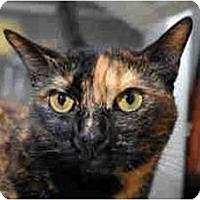 Adopt A Pet :: Myrna - New York, NY