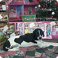 Adopt A Pet :: Junior - Linton, IN