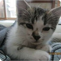 Adopt A Pet :: Tinker Bell - Sterling Hgts, MI