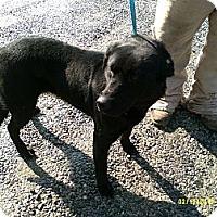 Adopt A Pet :: Katherine - Dundas, VA