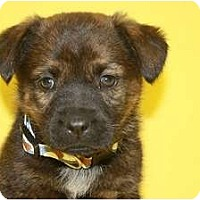 Adopt A Pet :: Willow - Broomfield, CO