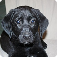 Adopt A Pet :: Allyse - in Maine - kennebunkport, ME