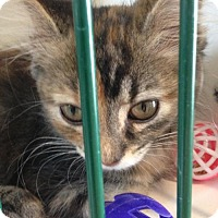 Adopt A Pet :: Linda - Hamilton, ON