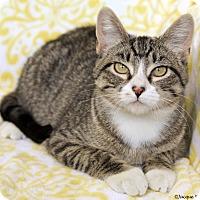 Adopt A Pet :: Maxine - St Louis, MO