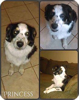 Australian Shepherd Mix Dog for adoption in DeForest, Wisconsin - Princess