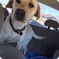 Adopt A Pet :: Ace - Dothan, AL