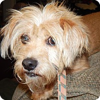 Adopt A Pet :: WILLIE - Anderson, SC