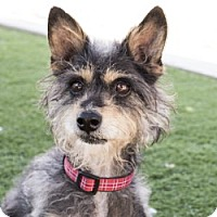 Adopt A Pet :: Chance - Agoura, CA