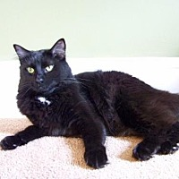 Adopt A Pet :: LM-Mitzie - Devon, PA