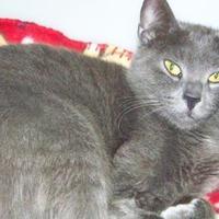 Adopt A Pet :: Amelia - Westville, IN