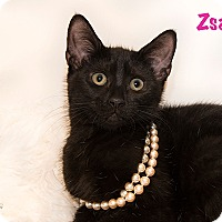 Adopt A Pet :: Zsa Zsa - San Juan Capistrano, CA