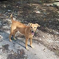 Adopt A Pet :: Kylie - Charlestown, RI