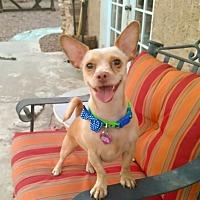 Adopt A Pet :: Taz - Las Vegas, NV