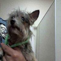 Adopt A Pet :: *BACON BIT - Sacramento, CA