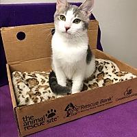 Adopt A Pet :: Tina - Yukon, OK