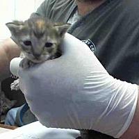 Adopt A Pet :: A288526 - Conroe, TX