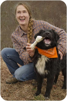 Border Collie/Shepherd (Unknown Type) Mix Dog for adoption in Crumpler, North Carolina - Lucky
