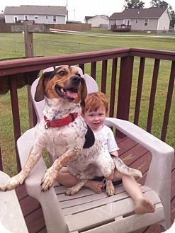 Beagle Mix Dog for adoption in Clarksville, Tennessee - Andy