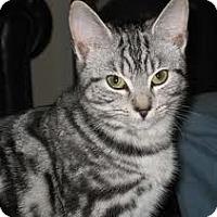 Adopt A Pet :: Zelda - Lancaster, MA