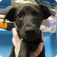 Adopt A Pet :: Emily (ADOPTED!) - Chicago, IL