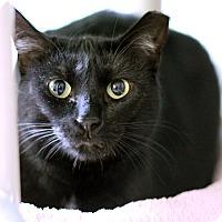 Adopt A Pet :: Senorita Sheba - Chicago, IL