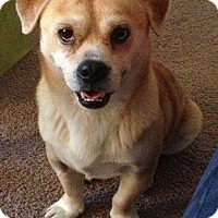 Adopt A Pet :: Toby - Gainesville, FL