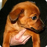 Adopt A Pet :: Echo - Erwin, TN