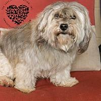 Adopt A Pet :: Billy - Inglewood, CA