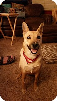 Shepherd (Unknown Type) Mix Dog for adoption in Newport, Michigan - Cleo