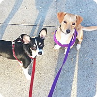 Adopt A Pet :: Francis and Lucie - Temecula, CA