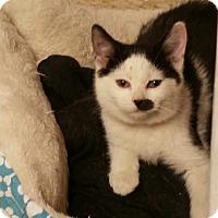 Adopt A Pet :: Mayflower - Medina, OH