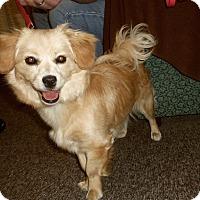 Adopt A Pet :: BONNIE - Medford, WI