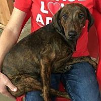 Adopt A Pet :: Brianna - Centerville, GA