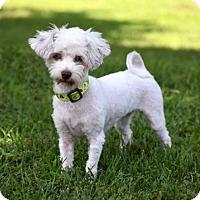 Adopt A Pet :: SUSIE - Andover, CT