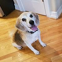 Adopt A Pet :: 1705-1221 Cuz (HOSPICE ADOPTER NEEDED <3) - Virginia Beach, VA