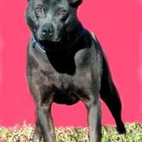 Adopt A Pet :: Michael - Ashland, VA