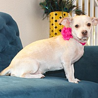 Adopt A Pet :: Dory - Henderson, NV