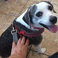 Adopt A Pet :: Rylie - Oak Ridge, NJ