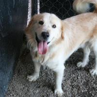 Adopt A Pet :: Indie - Norfolk, VA