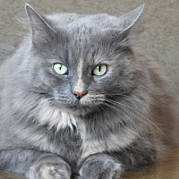 Adopt A Pet :: Bluesy - Green Bay, WI