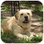 Photo 2 - Labrador Retriever/Terrier (Unknown Type, Small) Mix Dog for adoption in Kingwood, Texas - Buddy