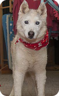 Husky Mix Dog for adoption in North Haledon, New Jersey - Belle