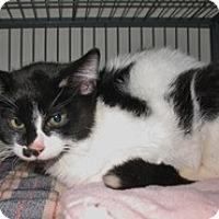 Adopt A Pet :: Tac - Shelton, WA