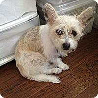 Adopt A Pet :: Gracie - Kingwood, TX