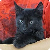 Adopt A Pet :: Mooney - Riverhead, NY