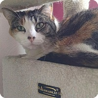 Adopt A Pet :: Samantha - Colorado Springs, CO